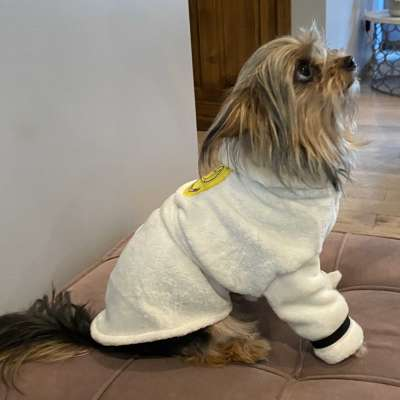 luxurious bathrobe for your dog Profile Picture