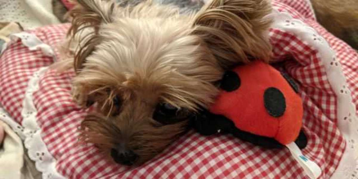 Prima and the ladybug