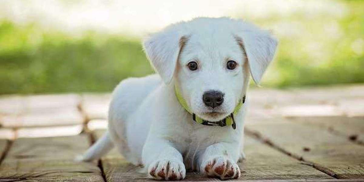 Before adopting the dog